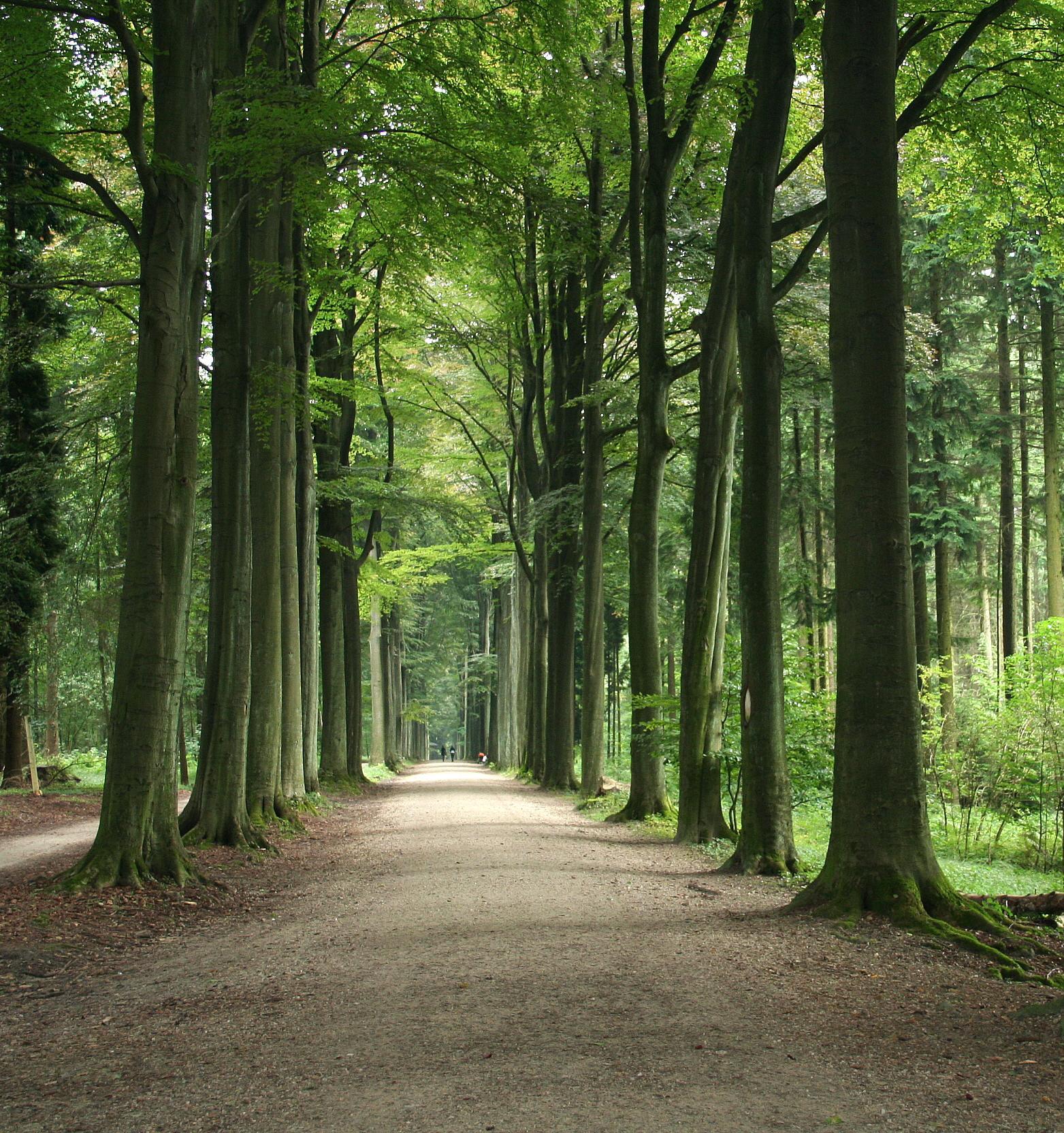 Объявлен набор волонтеров для посадки деревьев в Чехии