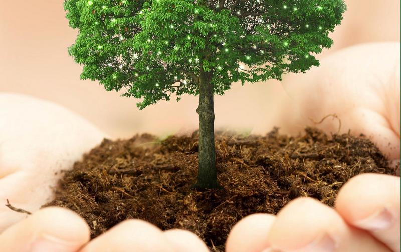 Экомаркет 4fresh сажает деревья за покупку натуральной косметики
