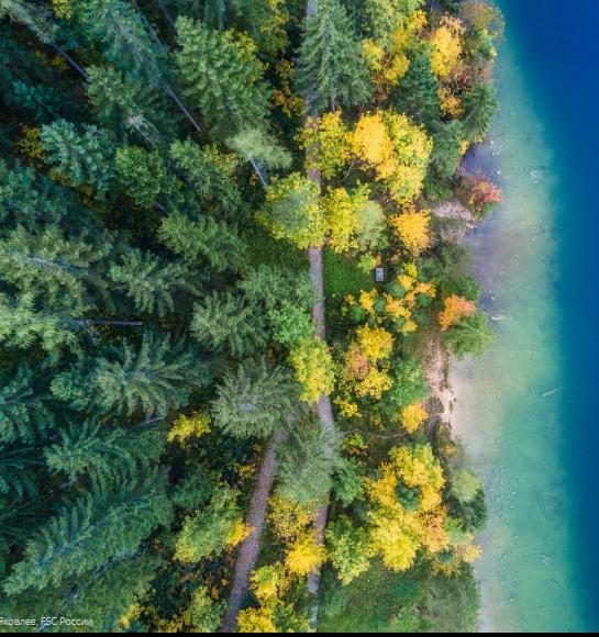 Всемирный день окружающей среды: Как измерить положительное воздействие лесов на воздух, почву и биоразнообразие