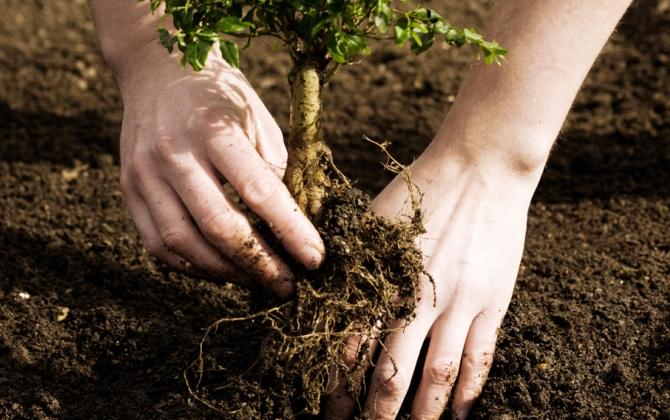 Мосприрода ждет волонтеров для посадки деревьев