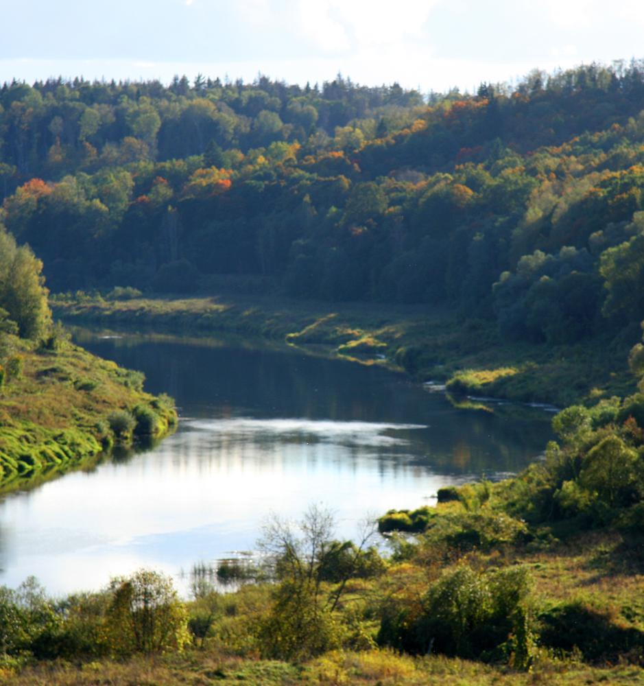 Открыта регистрация на посадку леса в Калужской области