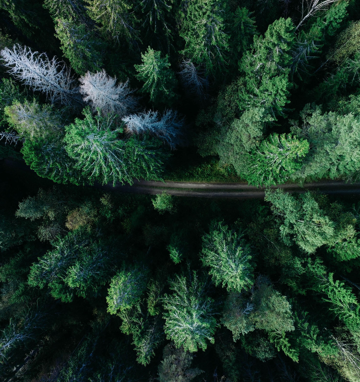 EcoGuild Talks пройдут в онлайн-формате