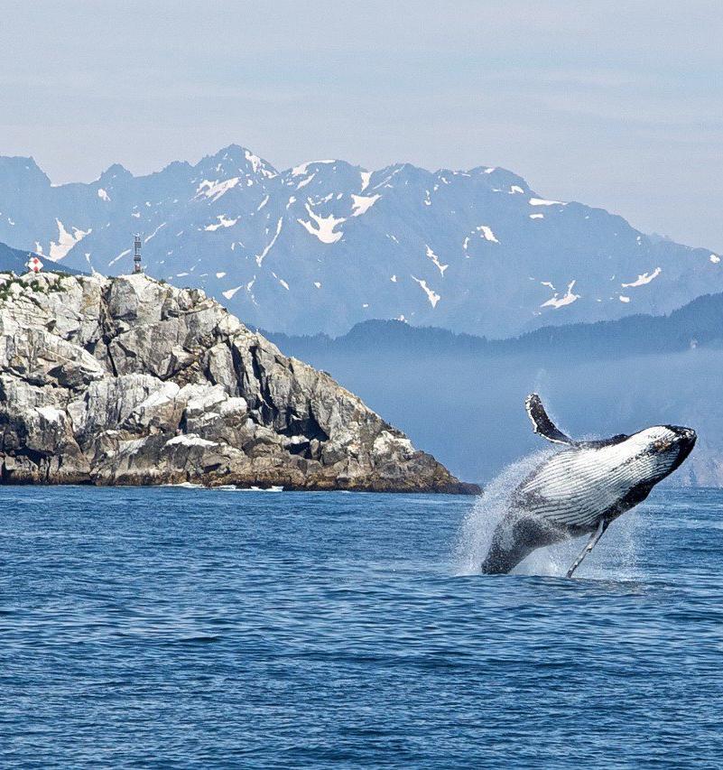 В России могут запретить промышленный вылов китов и дельфинов