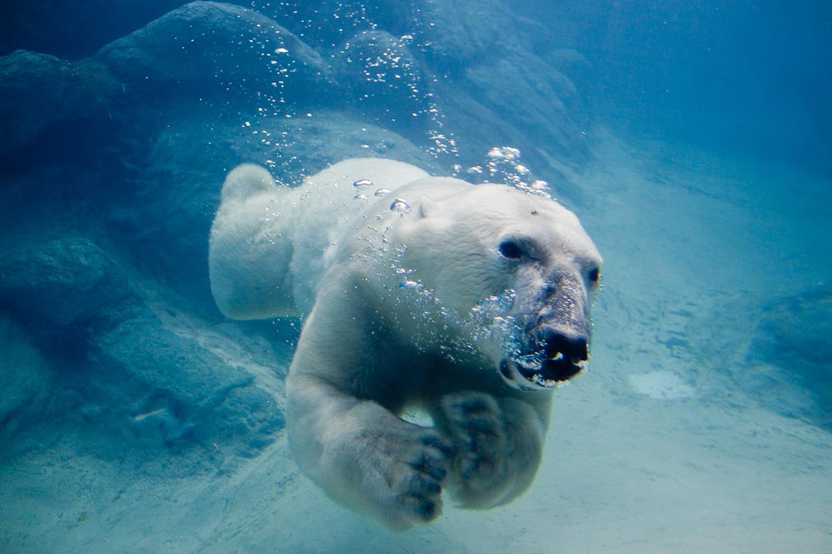 10 лучших магистерских программ в области экологии за рубежом
