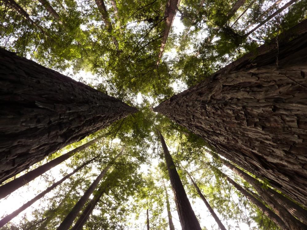 FSC проведет в «Сокольниках» праздник леса