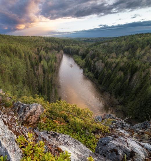 FSC России предлагает поддержать проект «Стражи леса»