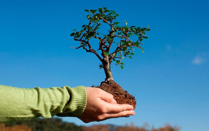 Посадить деревья в России теперь можно через банкомат