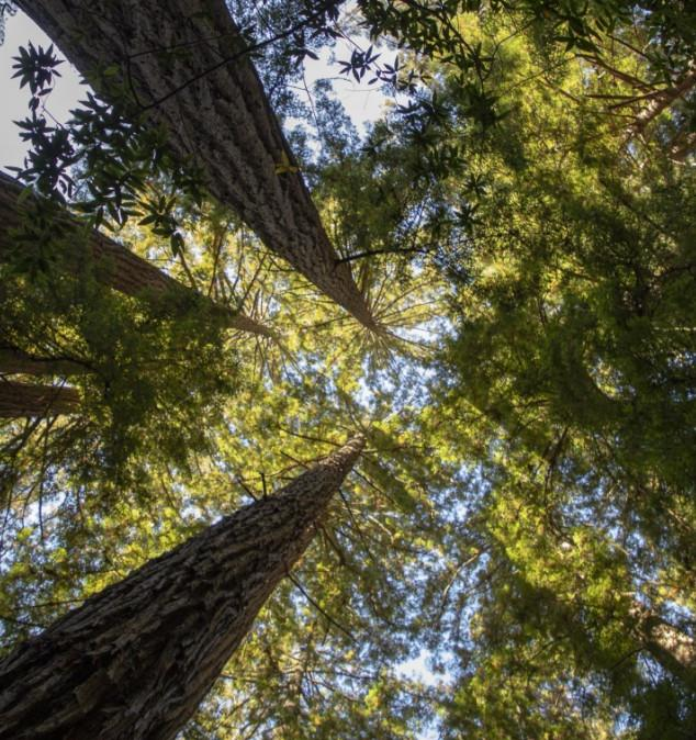 Проект «Посади Лес» приглашает всех желающих на посадку «Леса памяти»