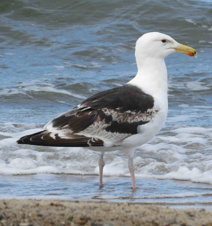 Изменение климата влияет на миграцию птиц