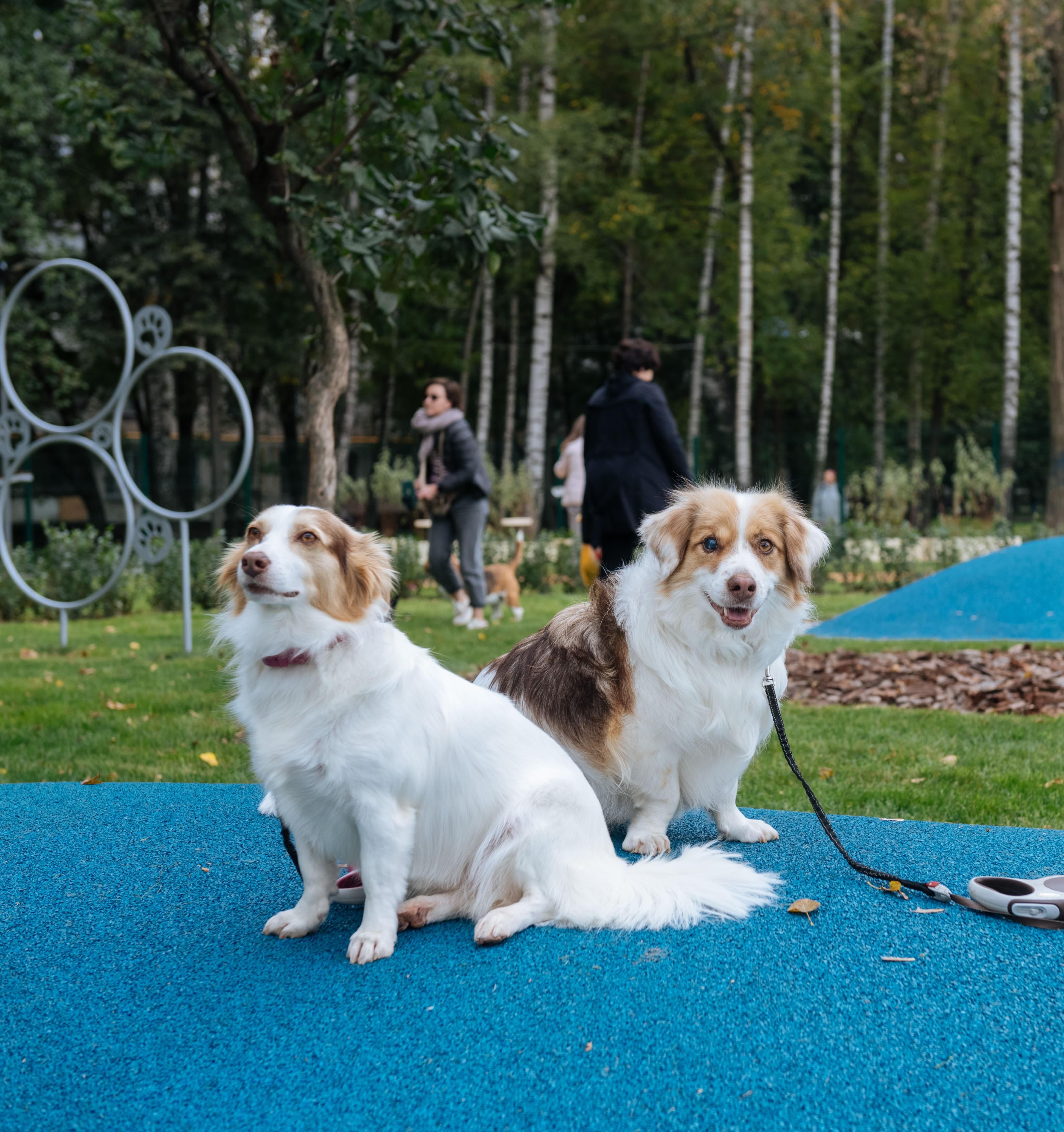 Площадки для собак из вторсырья построили в Москве