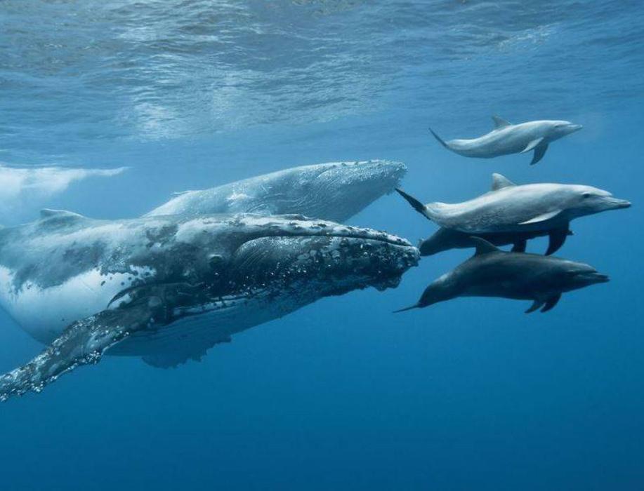 Экоактивисты приглашают отметить День китов и дельфинов