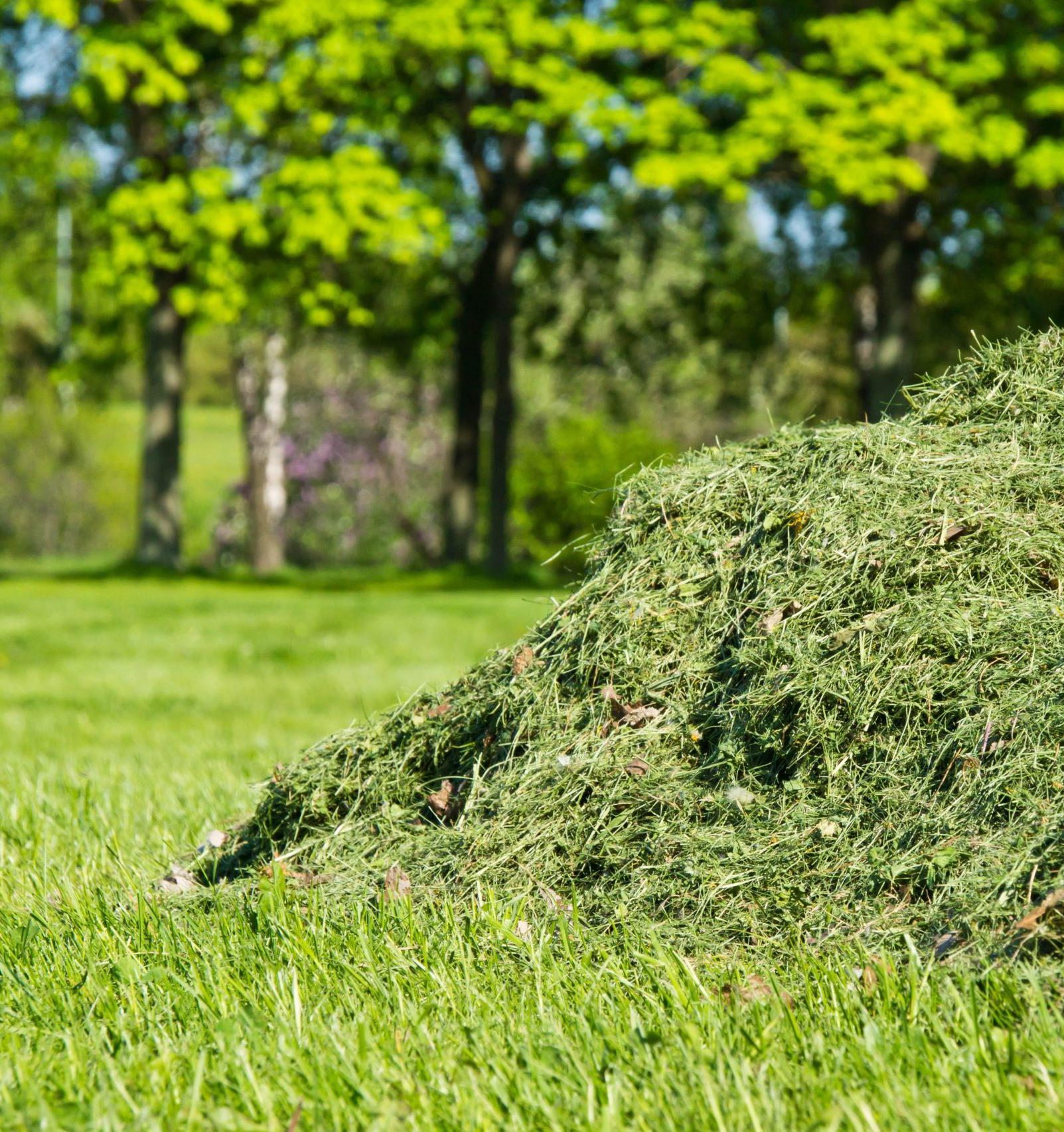 Томские студенты перерабатывают скошенную траву с помощью червей