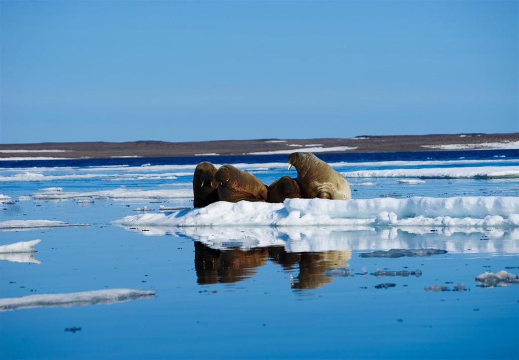 Национальный парк в Арктике ищет волонтеров