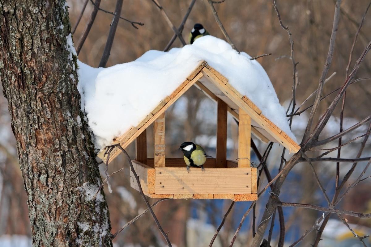 Союз охраны птиц объявил конкурс на лучшую кормушку