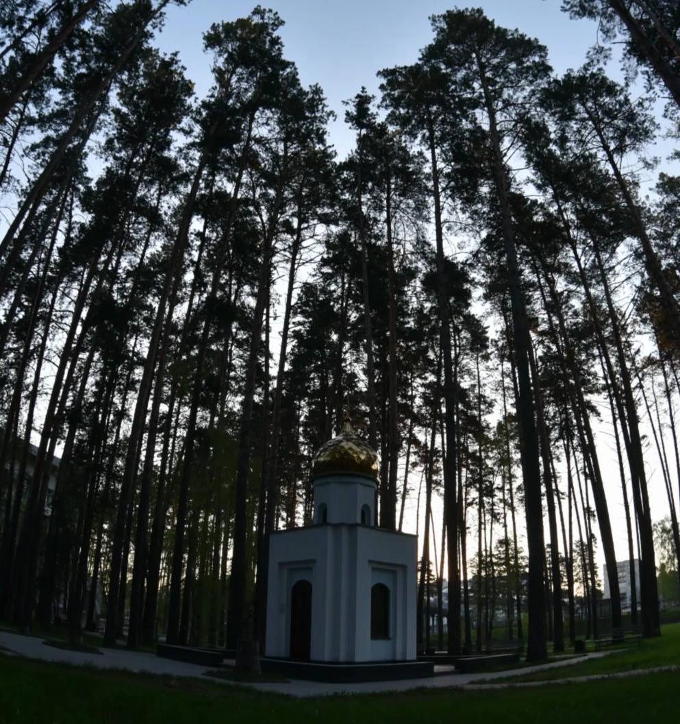 Как активные жители Новосибирска остановили планы мэрии по застройке массива городских лесов