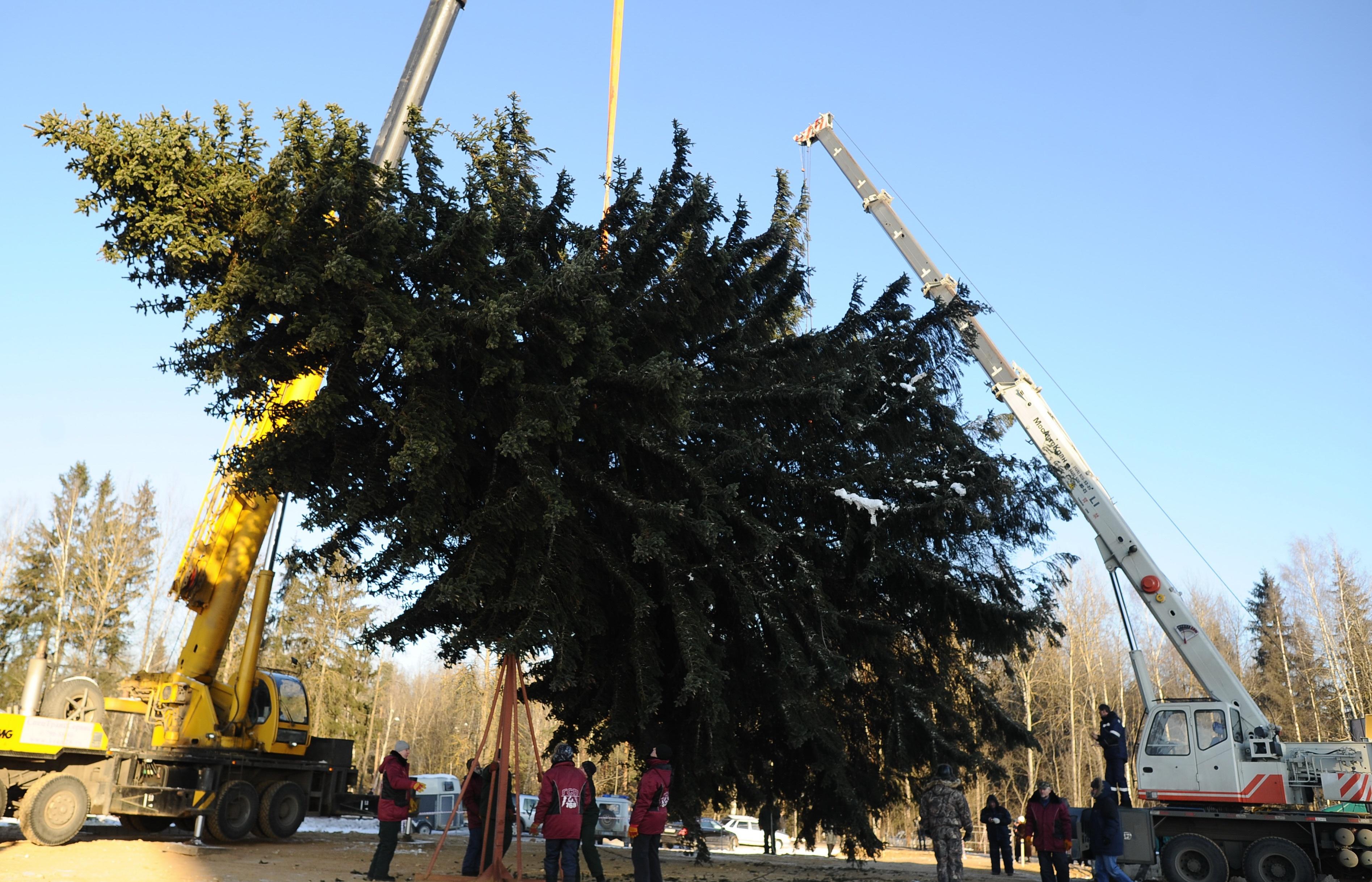 Кремлевскую елку переработают в лыжи и клюшки