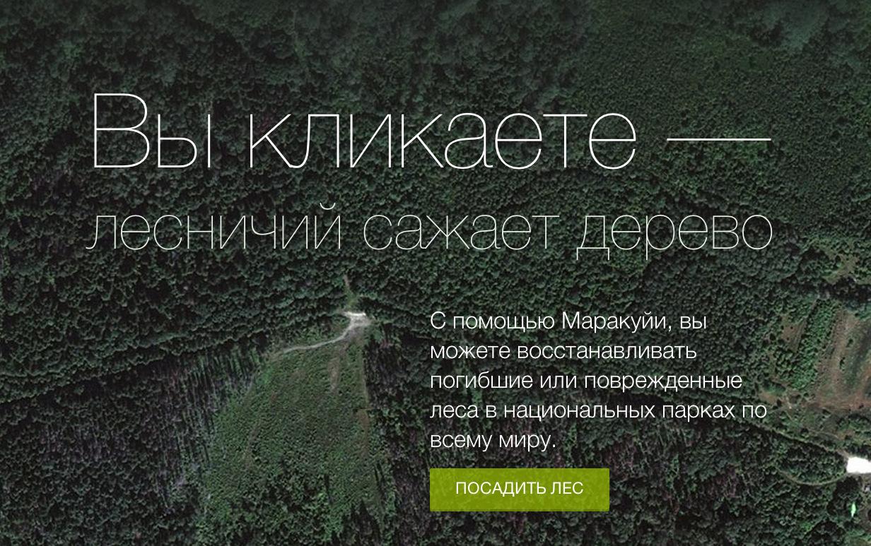 «Маракуйя» приглашает 5 октября посадить лес Путина