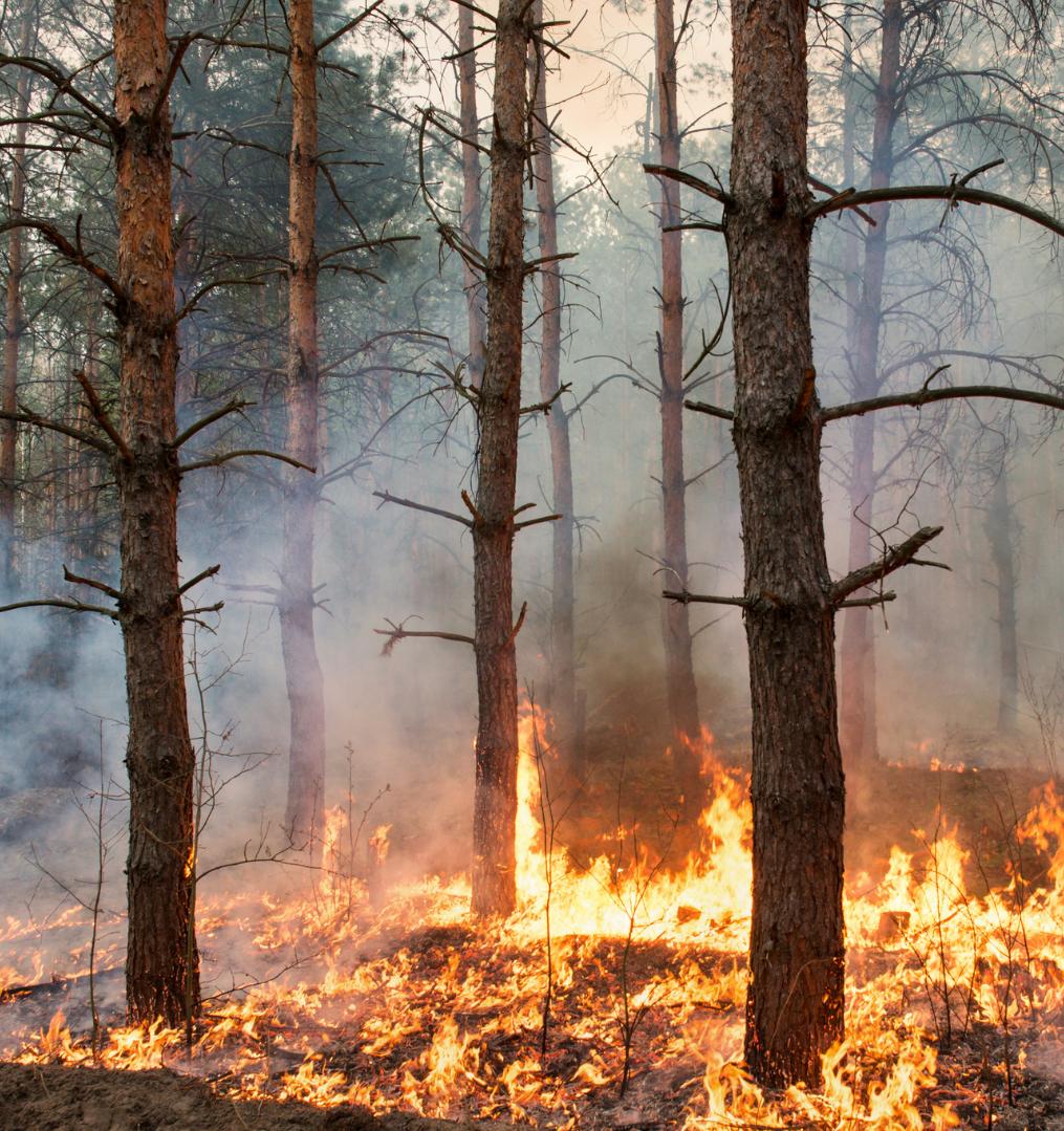 Сбор средств для добровольных лесных пожарных в Якутии и Мордовии продлили до 15 сентября