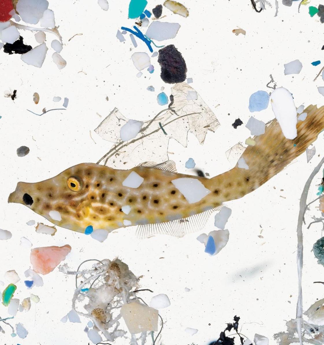 10 способов решения проблемы пластикового загрязнения
