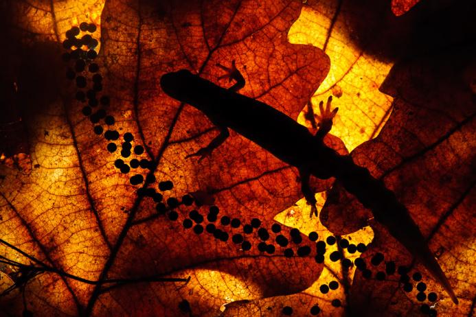 Начат прием работ на конкурс экофотографий «Золотая черепаха»