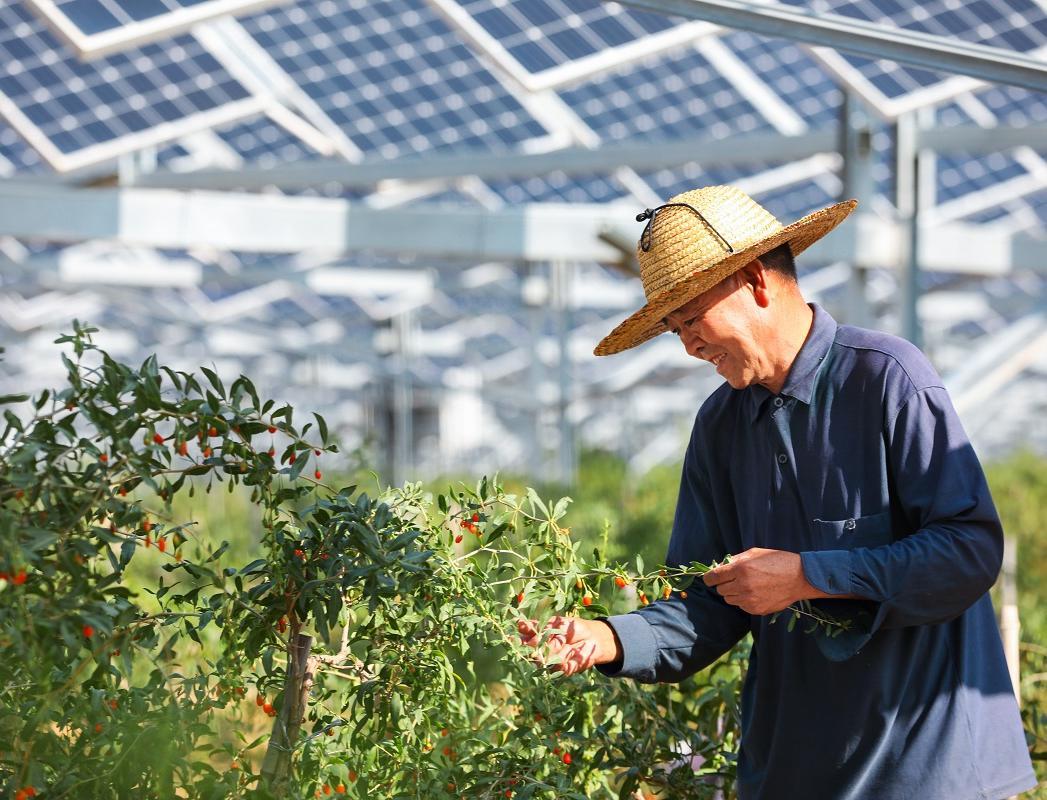 В Китае объединяют возможности солнечной энергетики и сельского хозяйства