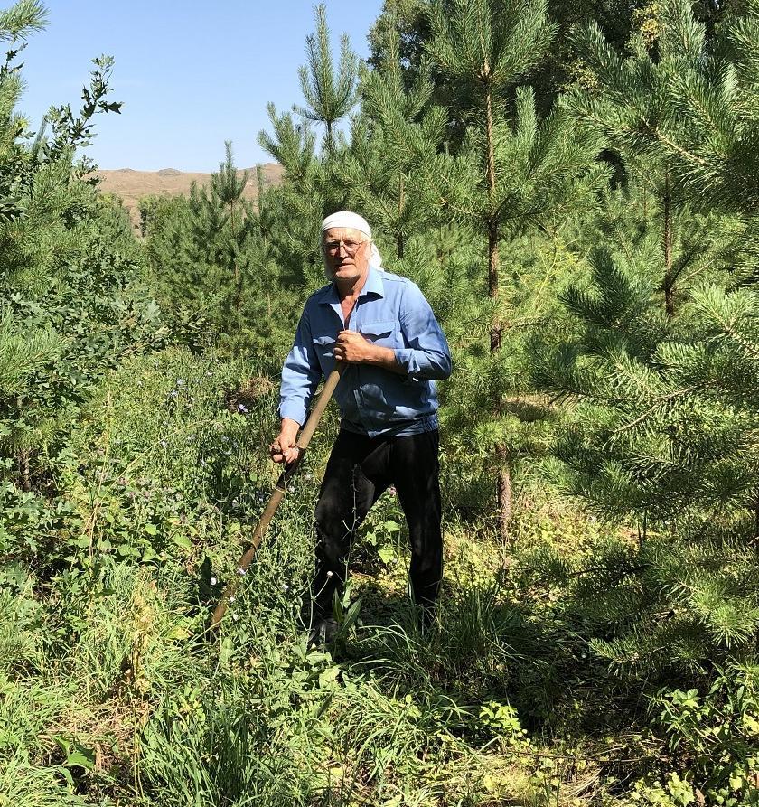 Житель Алтайского края Юрий Квасов за 16 лет высадил целый лес