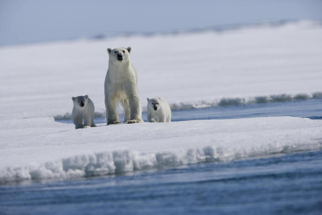 Минприроды оценило ущерб от изменения климата
