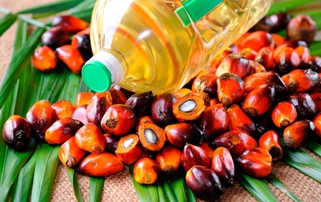 Ссылка дня: В чем вред пальмового масла для экологии и здоровья