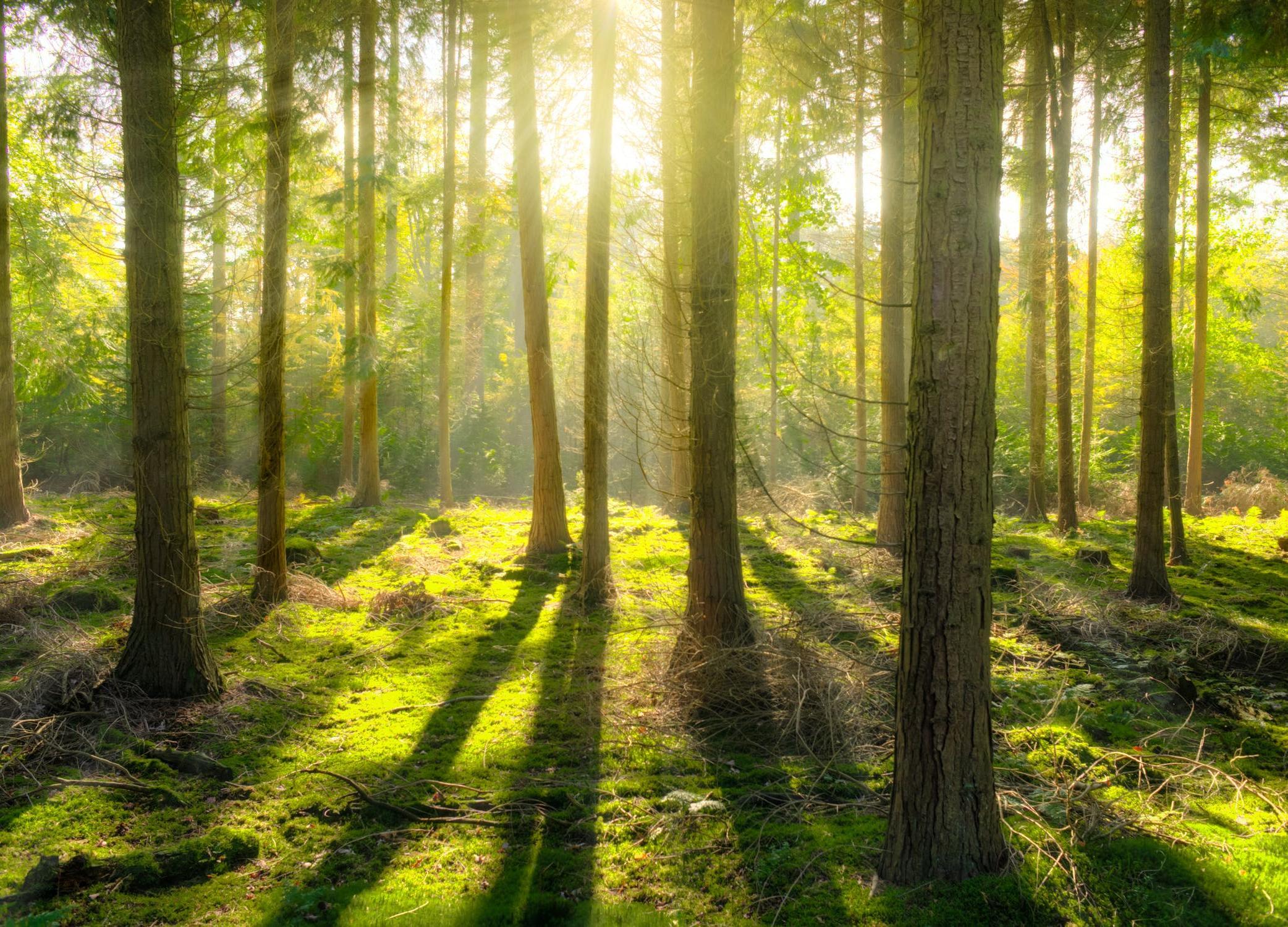 Леруа Мерлен научит студентов беречь лес