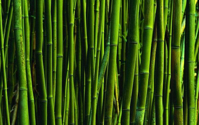 В Японии построят электростанцию, работающую на бамбуке