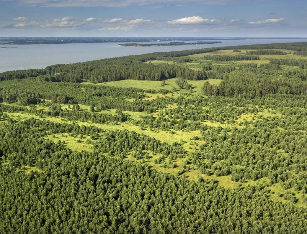 На сельхозземлях разрешат выращивать лес в экономических целях