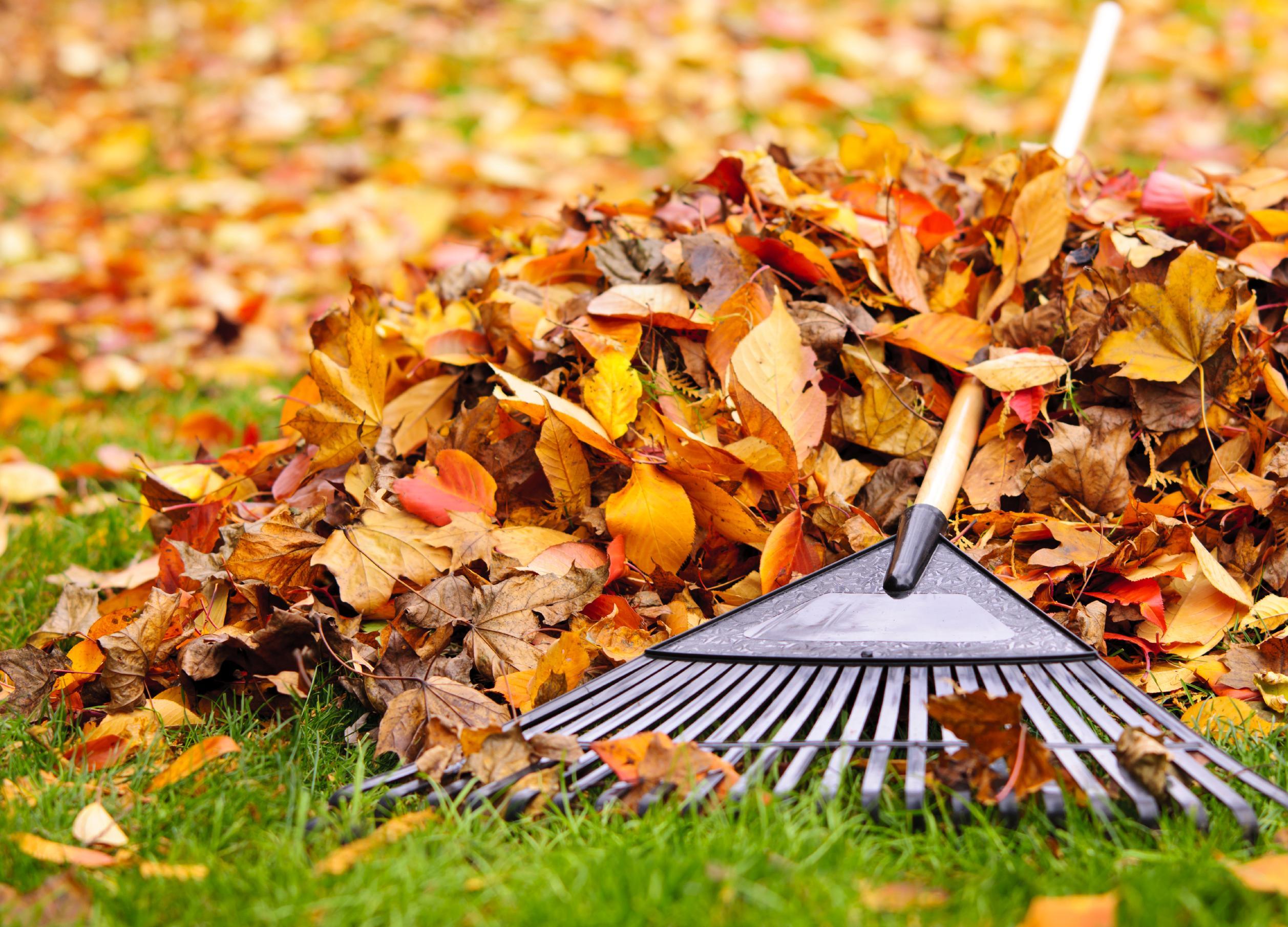 ЭкоИнструкция: Как бороться с уборкой листьев в парках и дворах