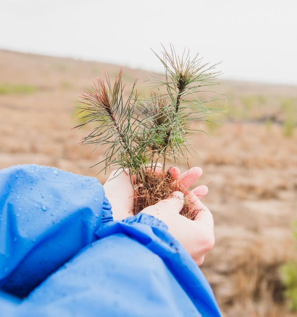 В Алтайском крае вырастет новый бор на месте сгоревшего