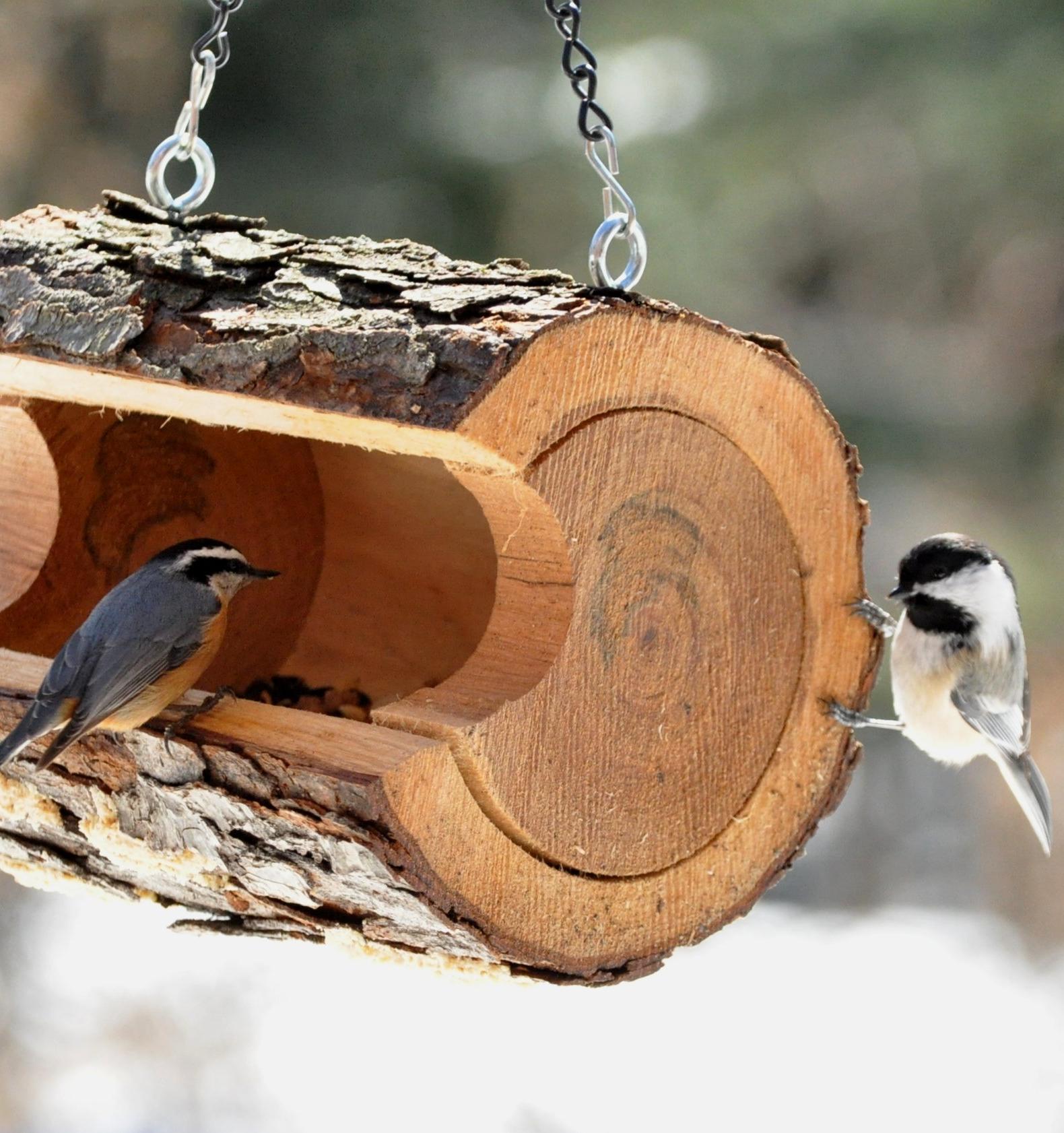 Посетители московских парков смогут установить кормушки для птиц