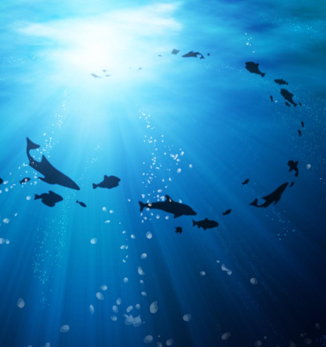 В каких видах рыб больше всего микропластика и как избежать его попадания в организм