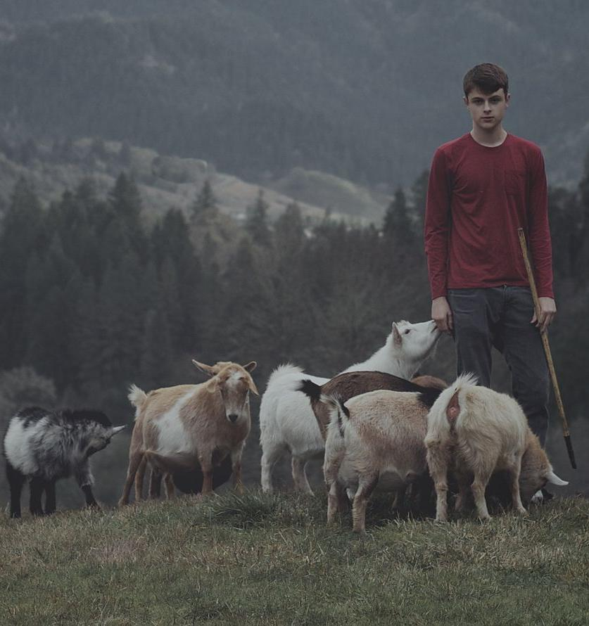 В США борются с лесными пожарами с помощью коз