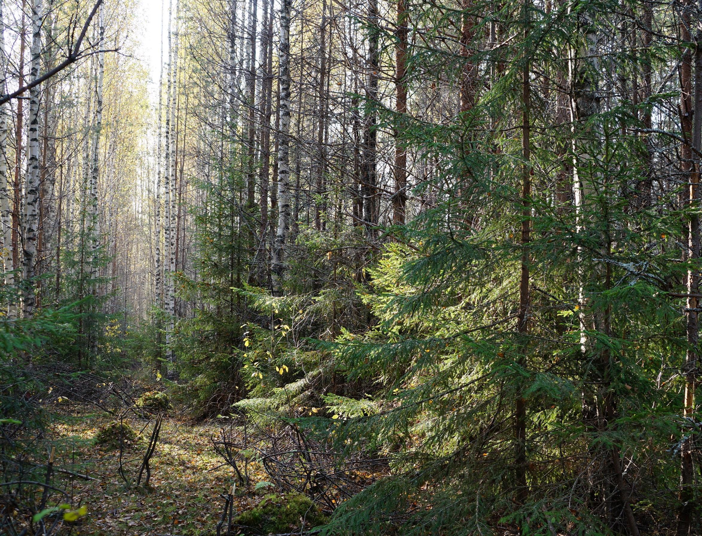 Новая «Лесная повестка до 2030 года» от IKEA: для улучшения управления лесами и сохранения биоразнообразия