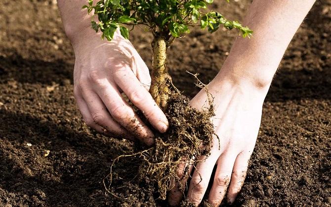 «Мосприрода» ищет тысячу волонтеров для посадки деревьев с 13 по 21 мая