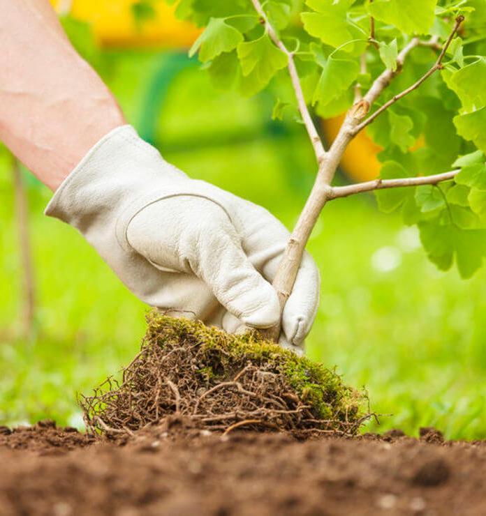Организаторы лучших посадок деревьев получат премии от Движения ЭКА