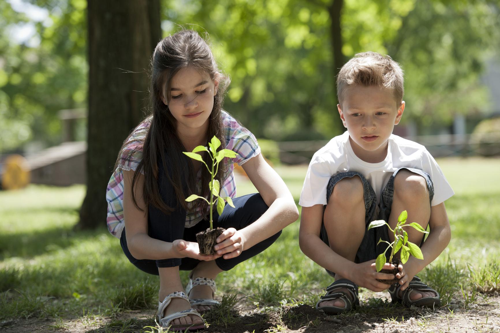 Экологи предлагают посадить деревья вместо букетов на 1 сентября