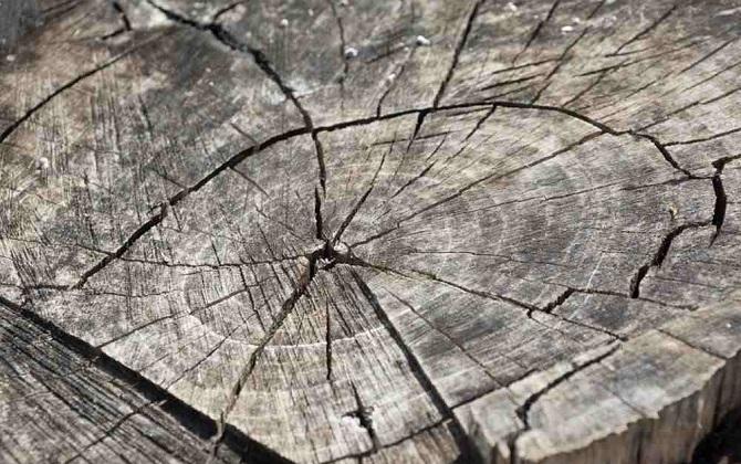 40 процентов деревьев в центре Москвы нуждаются в замене