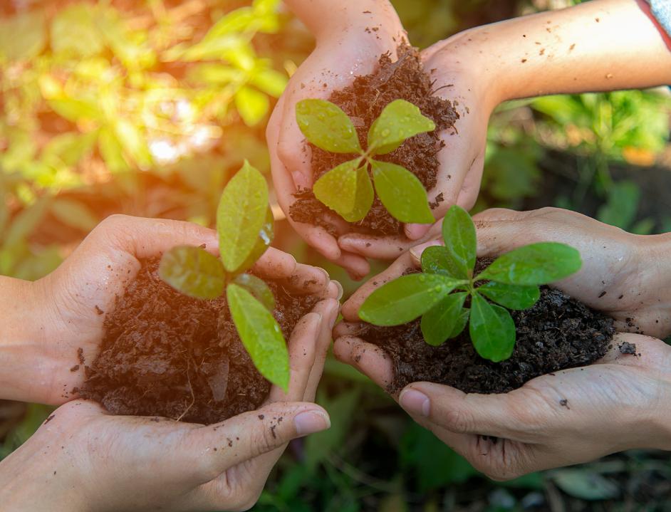 Марафон зеленых идей: как крупнейшие компании России и мира помогают экологии