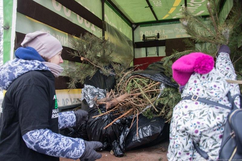 757 елок москвичи сдали на экологичную переработку