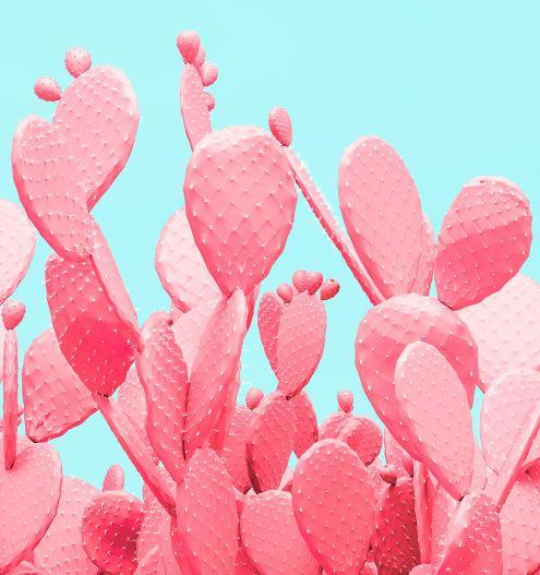 В Мексике изобрели биопластик из кактусов