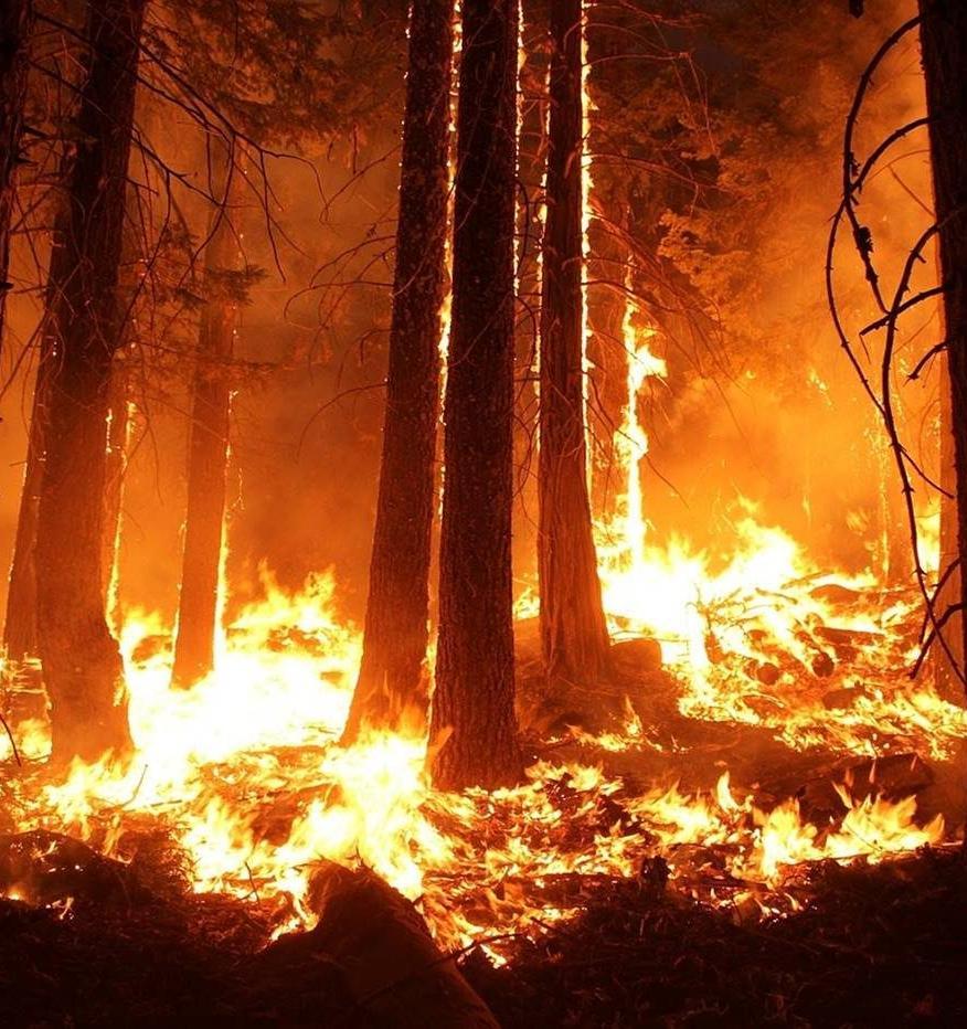 Жителей Ярославля приглашают принять участие в онлайн-тренингах о природных пожарах