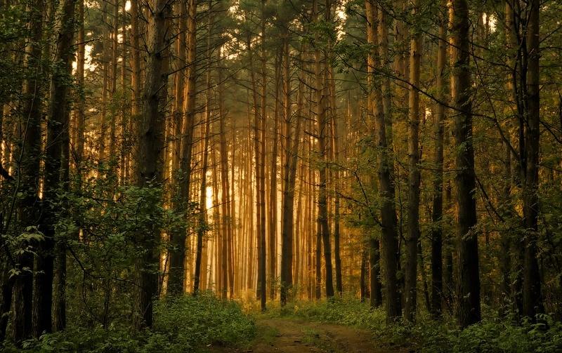 В России пройдет международная акция «FSC-пятница» по защите лесов