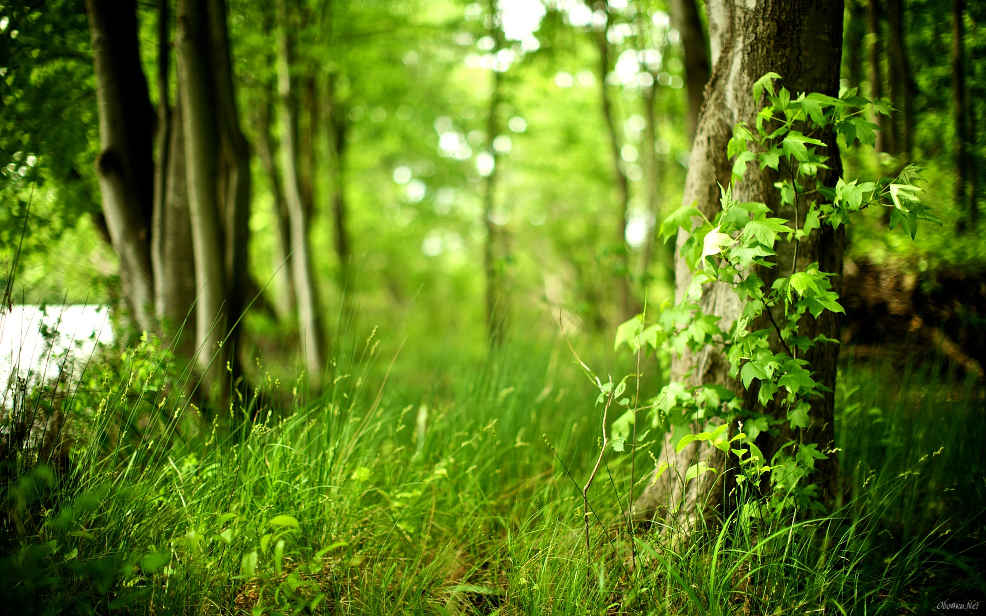 В Подмосковье планируют открыть экологические тропы