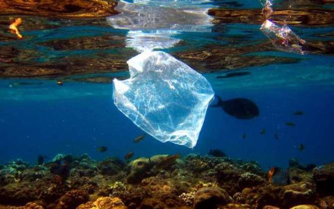 Видео дня: кит попросил вытащить из пасти пластиковый пакет