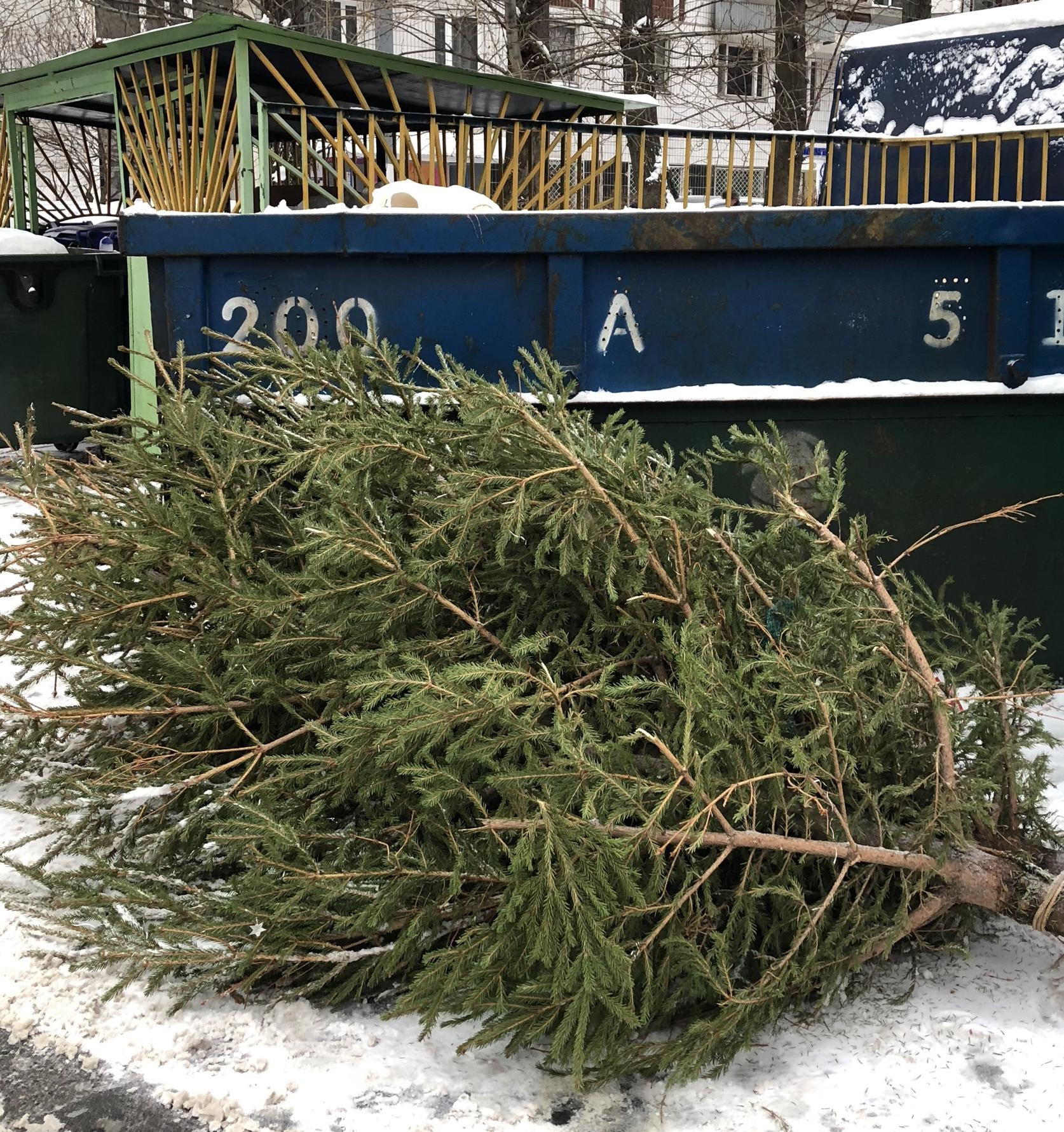 Что делать с новогодними елками после праздников