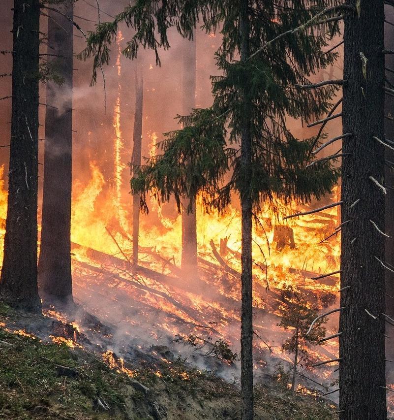 «Чистая Линия», «Перекрёсток» и «Карусель» помогут предотвратить лесные пожары